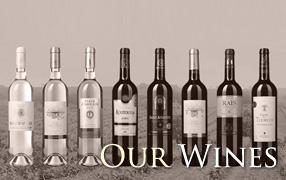 Les vins algériens de GCO